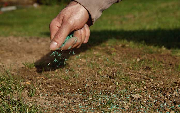 Man's hand spreading grass seed over a bare spot on his lawn