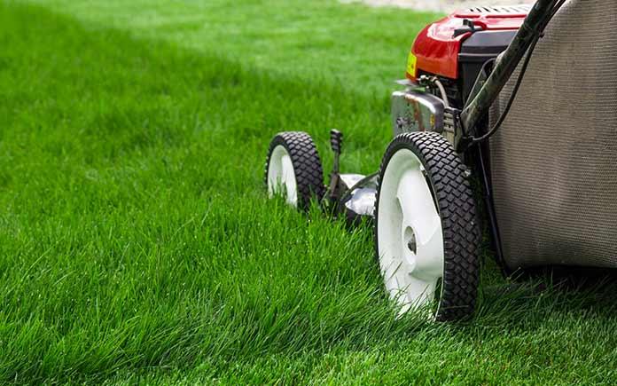 Lawn mower cutting grass too short