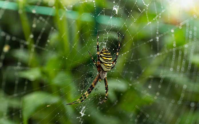 Lutte antiparasitaire naturelle: 3 bestioles pour aider votre jardin