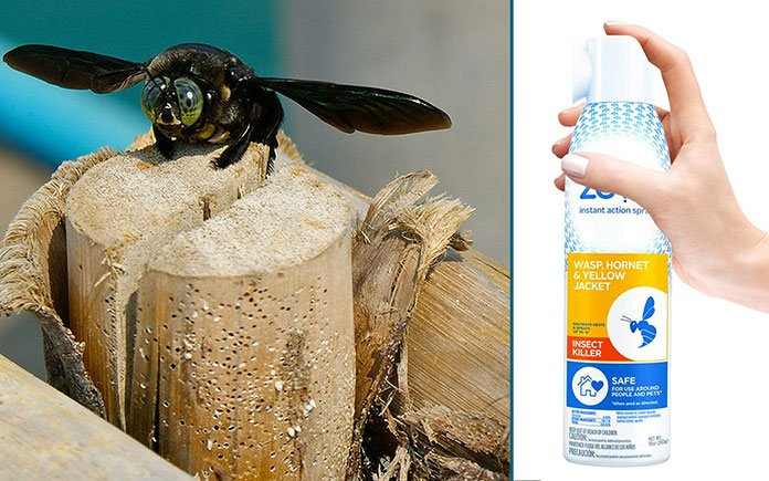 Split image of a carpenter bee on the left and Zevo bug spray on the right