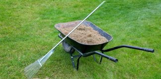 Green lawn with a wheelbarrow loaded up with thatch for disposal and a rake.