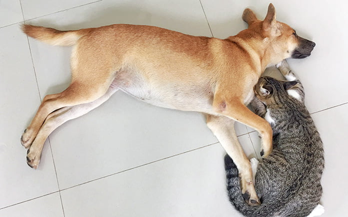 Pet-friendly home with dog and cat cuddling beside each other, sleeping on the kitchen tile floor