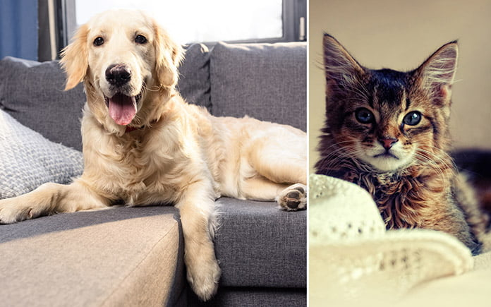 Dog resting on couch and cat resting in bed in a pet-friendly home