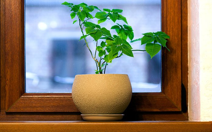 Single plant displayed in window sill to create a sanctuary