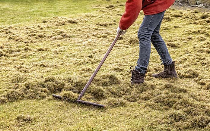 Woman uses a thatch rake to dethatch a lawn.