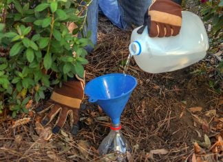 Pouring water into a funnel for a DIY drip irrigation system