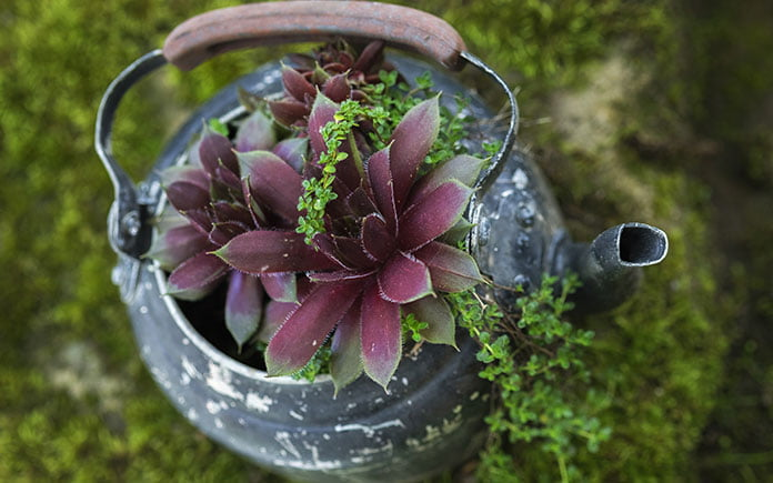 Reused teapot in a garden
