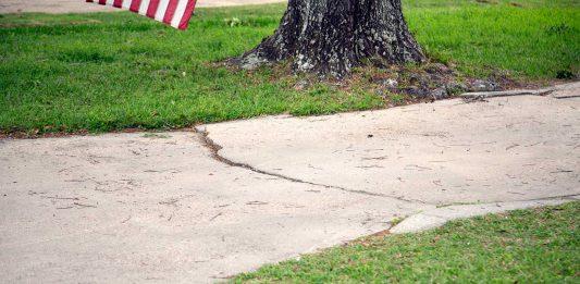 Cracked concrete walkway beside a tree in a southern Alabama neighborhood