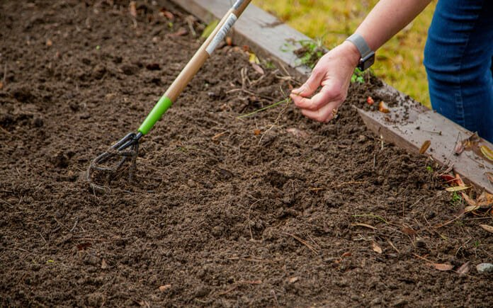 Pulling weeds from a raised garden bed