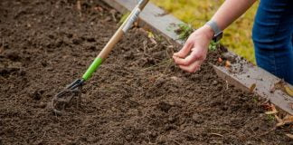 Person pulling weeds in a garden bed