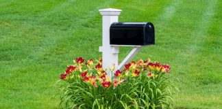Flowers around a mailbox in a front yard